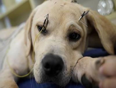 趣致宠物医院