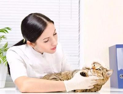 爱侣宠物医院